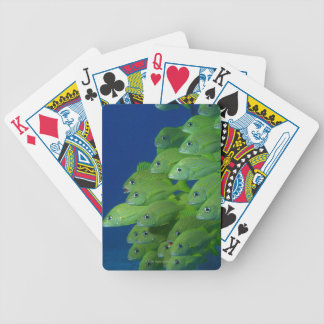 Escuela del francés bluestriped y de los roncos de baraja de cartas