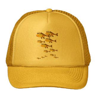 Escuela del gorra amarillo de los pescados