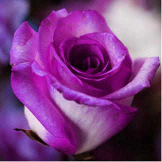 Escultura color de rosa púrpura de la foto esculturas fotográficas