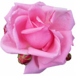 Escultura color de rosa rosada de la foto escultura fotográfica