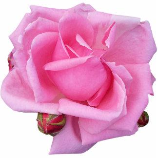Escultura color de rosa rosada de la foto fotoescultura vertical