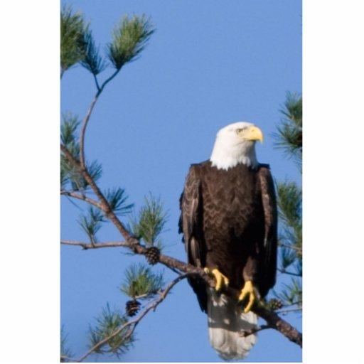 Escultura de Eagle Escultura Fotográfica