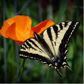 Escultura de la foto de la mariposa y de la amapol fotoescultura vertical