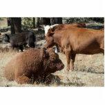 Escultura de la foto de la vaca y de Bull Escultura Fotografica