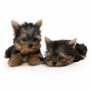 Escultura de la foto de los perritos de Yorkshire  Escultura Fotográfica