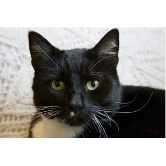 Escultura de la foto Lilly el gato Escultura Fotografica