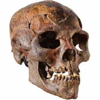 Escultura del cráneo 1 fotoescultura vertical