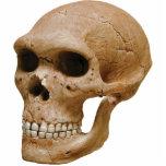 Escultura del cráneo 2 esculturas fotograficas