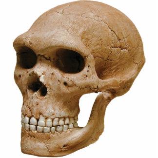 Escultura del cráneo 2 fotoescultura vertical