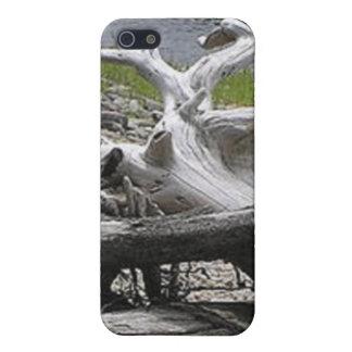 Escultura del Driftwood iPhone 5 Cárcasa