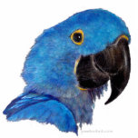Escultura - Macaw del jacinto Esculturas Fotograficas
