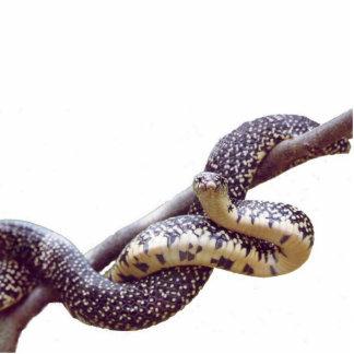 Escultura manchada de la foto de rey serpiente escultura fotografica