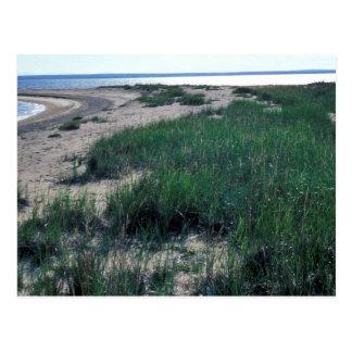 Escupitajo de la arena de la isla de Chamisso Postales