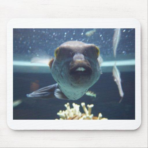 Ese pescado del diente de conejo mousepads