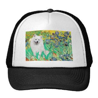 Eskimo Spitz 1 - Irises Hat