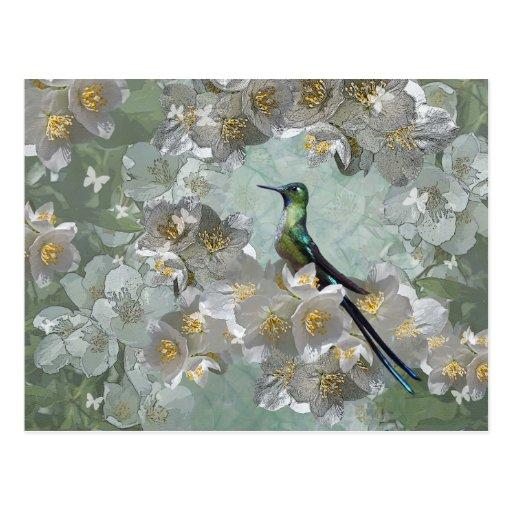 Esmeralda Postcard