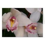 Espacio en blanco blanco de la orquídea tarjeta de felicitación