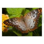 Espacio en blanco colorido Notecard de la mariposa Tarjetón
