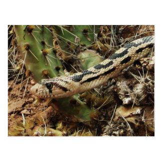 Espacio en blanco de la serpiente de Gopher Postales