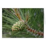 Espacio en blanco de la tarjeta del cono del pino