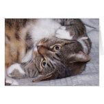 Espacio en blanco del gato de Tabby Tarjeta De Felicitación