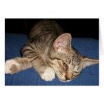 Espacio en blanco del gato de Tabby Tarjetón