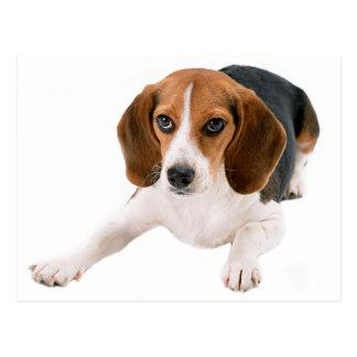 Espacio en blanco del perro de perrito del beagle postales