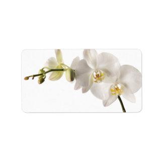 Espacio en blanco floral del Dendrobium de la orqu Etiquetas De Dirección