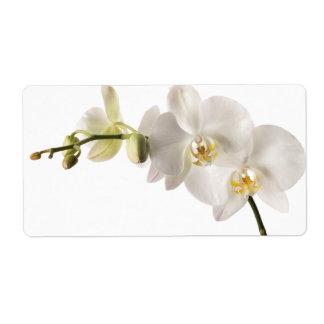 Espacio en blanco floral del Dendrobium de la orqu Etiquetas De Envío