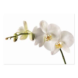 Espacio en blanco floral del Dendrobium de la orqu Tarjetas De Visita Grandes
