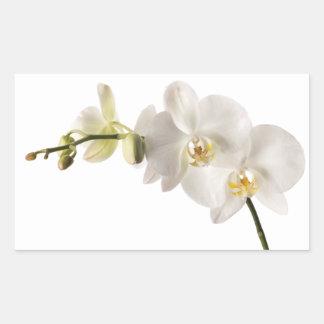 Espacio en blanco floral del Dendrobium de la Pegatina Rectangular