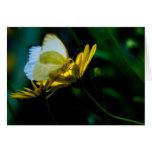 Espacio en blanco hermoso Notecard de la mariposa Felicitación