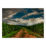 Espacio en blanco Notecard del campo de maíz del Tarjeta Pequeña