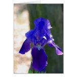 Espacio en blanco púrpura de la tarjeta de felicit