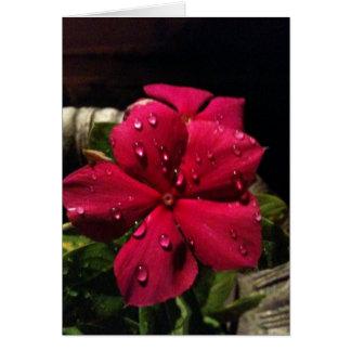 Espacio en blanco rojo de la flor tarjeta