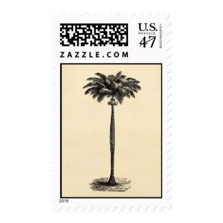 Espacio en blanco tropical de la plantilla de la sellos