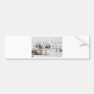 Espadañas en el lago congelado pegatina para auto