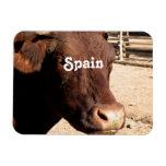 Español Bull Imanes