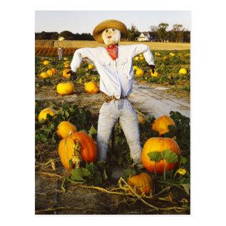 Espantapájaros de Halloween en campo de la calabaz Postales
