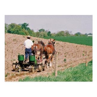 Esparcidor de la semilla de Amish Tarjetas Postales