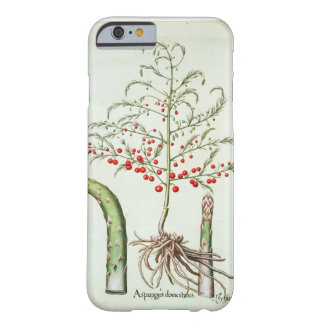 Espárrago común en flor y fruta, del 'Ho Funda Para iPhone 6 Barely There