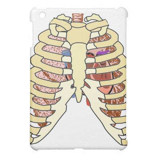 Espec. del corazón de los pulmones de las costilla