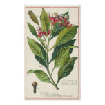 Especias de las hierbas de la comida del vintage,  posters