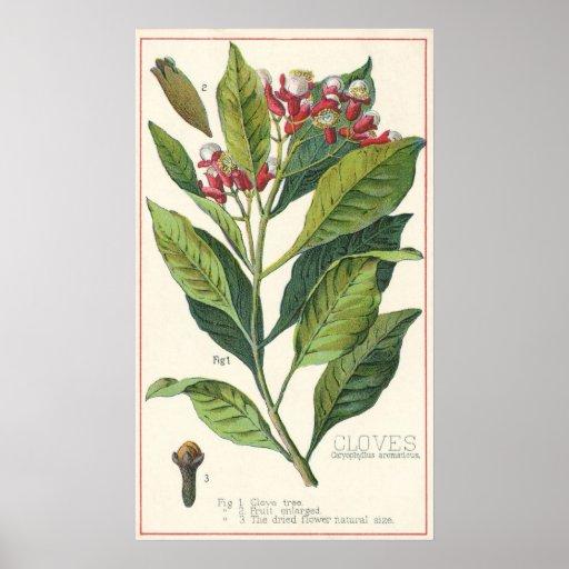 Especias de las hierbas de la comida del vintage, póster