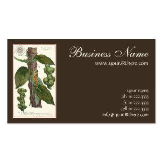 Especias de las hierbas de la comida del vintage,  plantilla de tarjeta de negocio