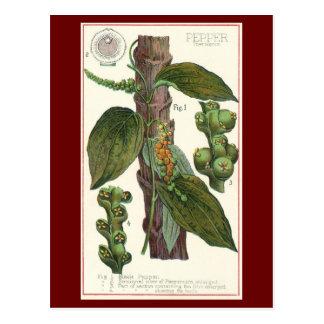 Especias de las hierbas de la comida del vintage, postal