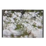 Especie: Cottongrass comunes
