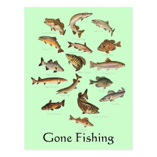 """Especie de los pescados """"ida a pescar"""" la postal"""