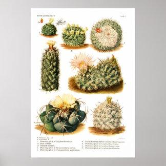 Especie del cactus posters