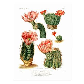 Especie del cactus postal